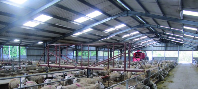 Glenalmond Estate Farm, Sheep sheds